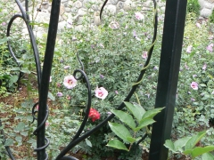 wrought-iron-trellis-arbor-3